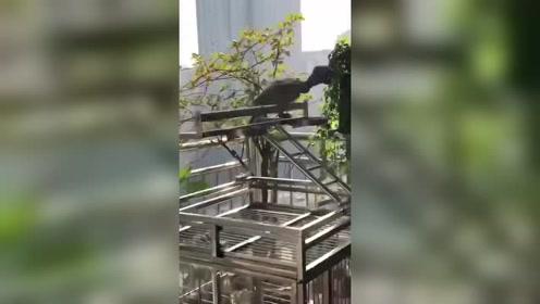 一只鸟养着养着突然就这样了