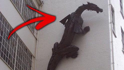 人们拍摄到的四个疑似龙的视频