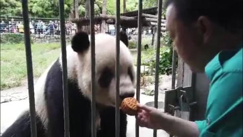 """为五仁月饼正名,国宝大熊猫的最爱,""""五体投地""""吃得太香啦"""