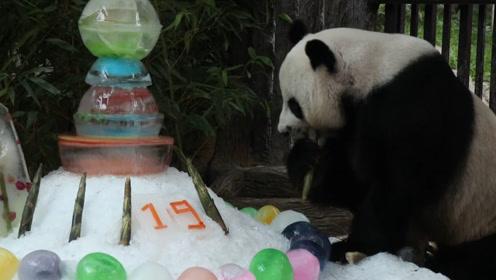 """旅泰19岁大熊猫""""创创""""离世 上月刚过完19岁生日 死因待查"""