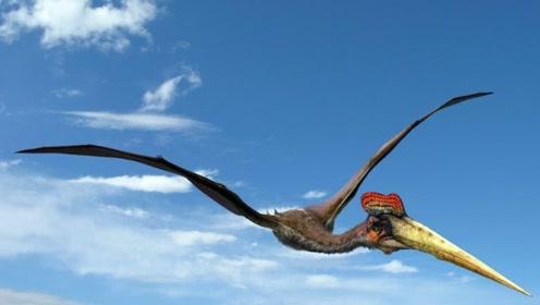这或许是最大的飞行动物,翼展超10米,网友:不可思议
