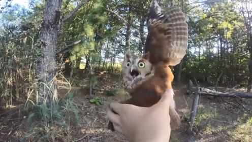 男子救援被困的猫头鹰,猫头鹰一脸惊愕:你可别过来,本鹰超凶的