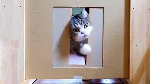 网友做的猫咪身材测试,猫主想要钻过去办法总是有的!