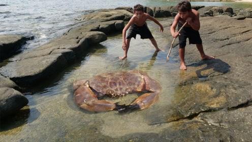 世界上最大的螃蟹,身长可达一米多,一条腿就够你吃饱了!