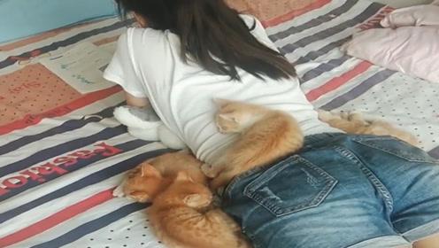 捡回来一窝流浪猫,胆子越来越大,竟趴在我女儿身上睡觉!