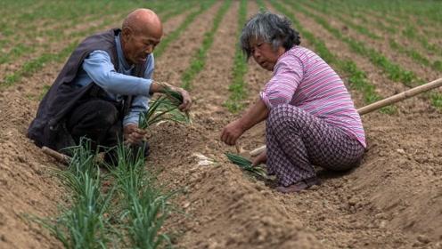 为什么农村种地的都是老人?原来年轻人都在干这些,90后最扎心