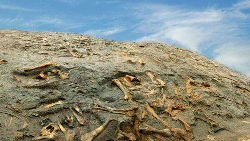 """历史上,只存在5次生物大灭绝?科学家发现""""新""""的生物大灭绝"""