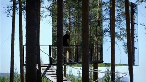 最神奇的房屋,搭建在6米高的树上,还能在森林中隐身!