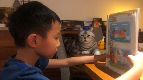 """姚晨五岁儿子学英语 猫咪一旁""""陪读""""显温馨"""