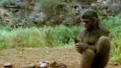 巴拿马猴类进入石器时代,或将再度进化成古人类,专家表示担忧!