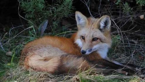 """村民发现""""狐狸洞"""",冒险将其挖开后发现了令人意外的惊喜"""
