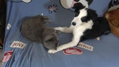 天刚刚亮,主人家的猫咪跟狗狗又聚集在一起了,这是开早会呢吗