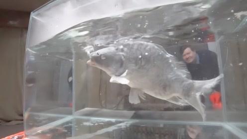 零下200度的液氮到底有多可怕,看这条鱼的下场就懂了