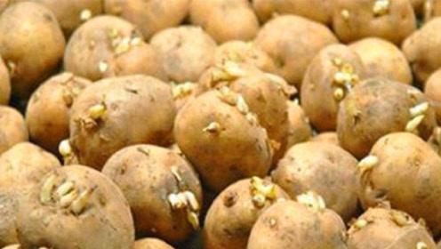 发了芽的土豆到底能不能吃?速来涨知识,别再无知了!