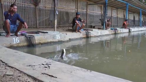 钓鱼:水池里的鱼就是容易上钩