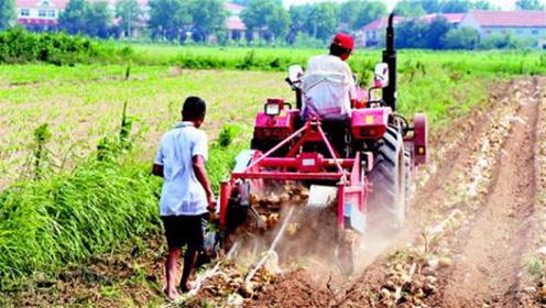 山东一位农民伯伯火了,发明自动收土豆机器,一小时可挖完3亩