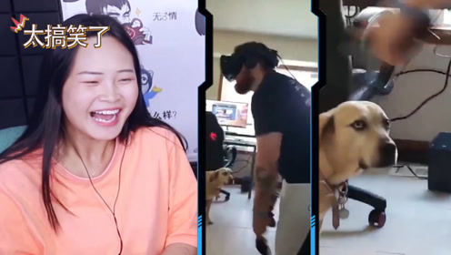 憋笑大挑战:主人玩VR游戏手舞足蹈,家里的黄狗看呆了!