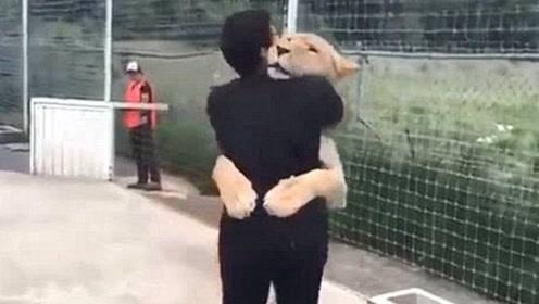小狮子见到时隔6年的养父,立马冲上前撒娇拥抱,场面太温馨了!