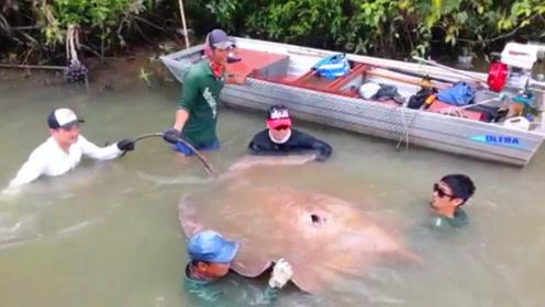 6个人一起才抱起这条大鱼,长相奇特,究竟是什么鱼?