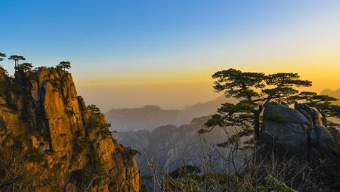 中国最美树王榜首,从石头缝里长出,摇钱树说的就是它