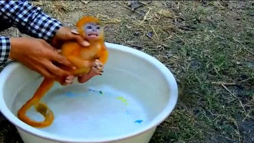 男子给小猴子洗澡,把小猴吓得瑟瑟发抖:你要对宝宝做什么?
