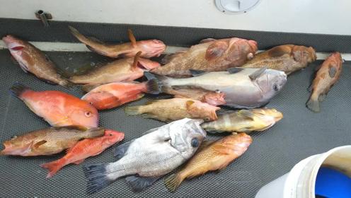小艇海钓,红斑鱼等高级海鲜,这次能赚回船费了!