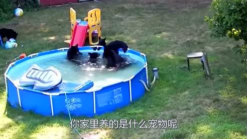 夫妻俩把黑熊当宠物养,每天精心照顾,没想到还会撒娇