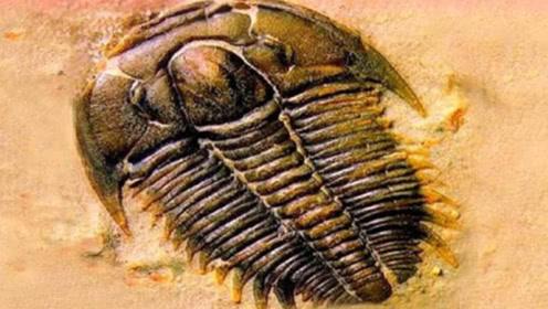 地球出现5亿年化石,上面的图案让人害怕,科学家直呼这不可能!