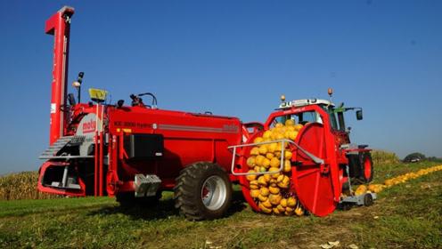 """老外这农业机械太先进!全自动南瓜收割机,""""吃瓜吐籽""""效率超高"""