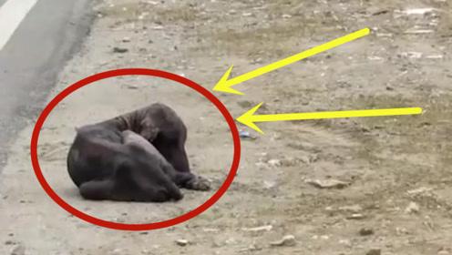可怜的狗狗被遗弃,饿的只剩一副骨架,瞬间泪奔了!