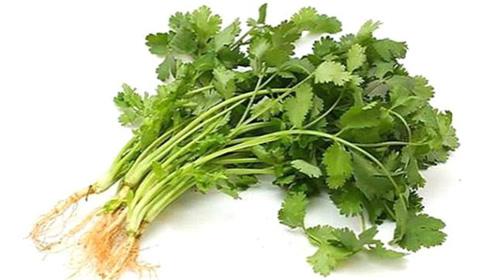 香菜这样保存,放一整年都翠绿不会坏,再也不怕涨价了,都看看吧