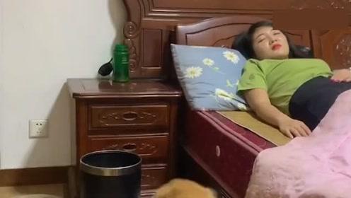 女主人很讨厌金毛,狗狗在她感冒的时候帮她买药照顾她,被感动