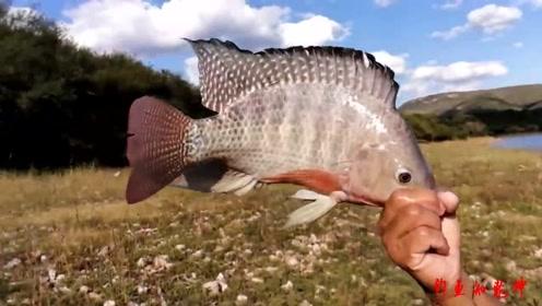 还是水深的地方鱼多,甩了几网渔获都不少!