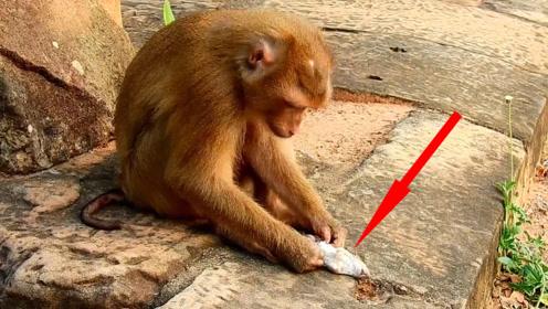 猴子抓住一只老鼠,下一秒老鼠崩溃了:这是猴子该干的事吗?