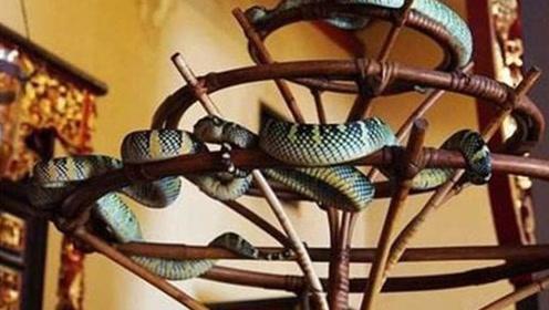 这个寺庙供养着数万条毒蛇,香客却络绎不绝,到底为什么?