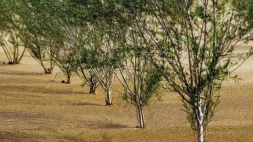 马云巨资打造的蚂蚁森林,时隔三年,现在变成了什么样了?