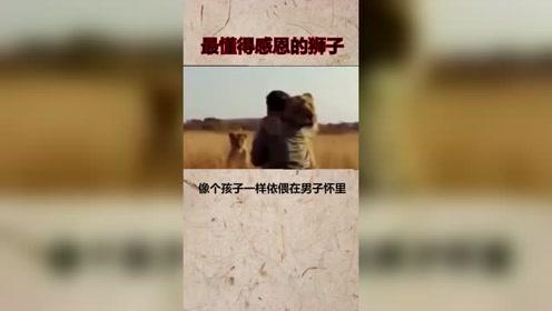 世界上最懂得感恩的动物!狮子尚能记得十年前的恩情,而人呢?