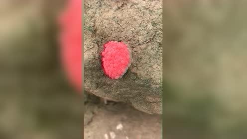 大自然的礼物你见过吗