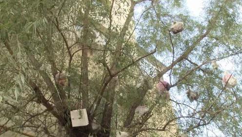 居民空投垃圾挂满树,环卫坐铲车清理