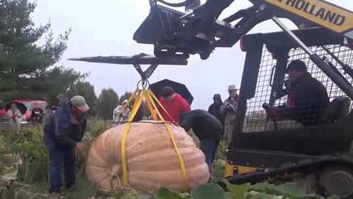 国外农民种出巨型南瓜,凭1782斤的重量夺得冠军,想搬走还得用吊车