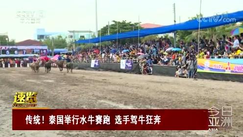 传统!泰国举行水牛赛跑 选手驾牛狂奔