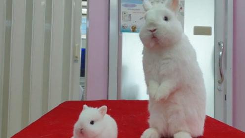 这才是一个模子里刻出来的长相,小兔子也太像麻麻了吧!