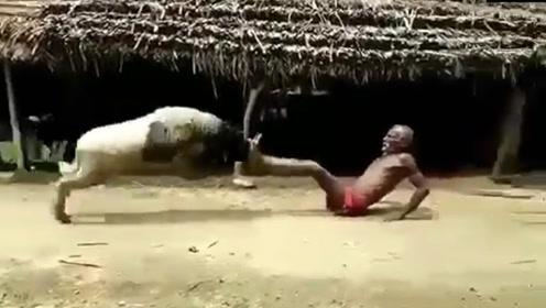老人恶斗发狂山羊,场面一度失控,镜头记录全过程