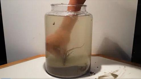 将海水密封一年,会产生什么现象?老外亲自实验结果太神奇!