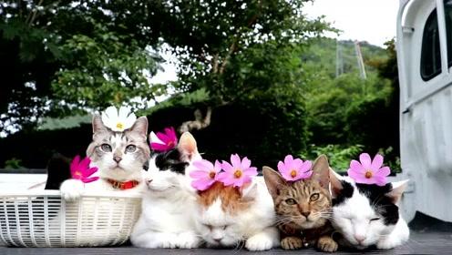 太萌了,猫咪头顶花朵拍全家福,网友:又想骗我养猫
