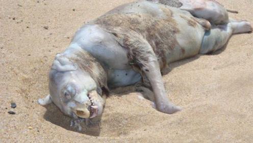 怪物尸体被冲上岸,拥有人类一样的四肢?专家看到都懵了