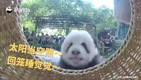 我是倔强的小熊猫 我要回笼睡觉觉