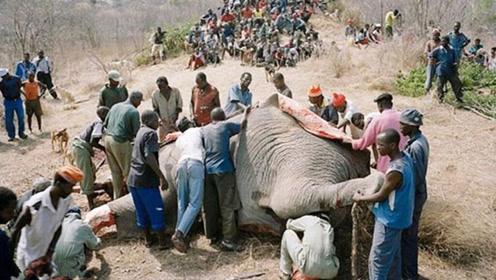 非洲人竟吃大象肉,背后原因你知道多少?看完你都不信