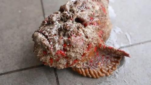 世界上最毒的鱼,石头鱼,吃过石头鱼的人,对它的味道赞不绝口