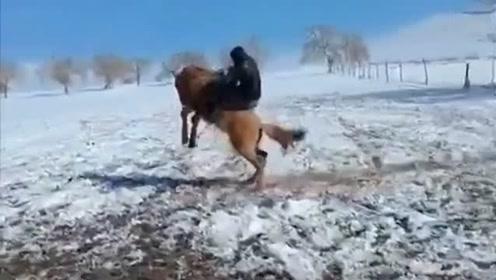 这只马儿的脾气不小,一般人可真驾驭不了,网友:真担心大哥掉下来!